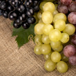 Grapes on a old linen fabric background texture — Stock Photo