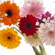 Colourful Gerbera daisies on a sparkly pastel background — Stock Photo