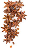 Anisetree anise — Stock Photo