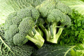 Cabbage of a broccoli — Stock Photo