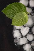 Ice cubes isolated on black — Stock Photo