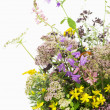 Bouquet of medicinal herbs — Stock Photo #31726657