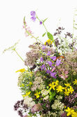 Bouquet of medicinal herbs — Stock Photo