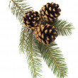 Fir-tree branch with cones — Stock Photo #37049763