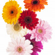 Foto de Stock  : Daisy flower gerberbouquet isolated