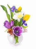 Flowers spring — Stock fotografie