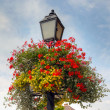 Flower basket on an old lamp post — Stockfoto