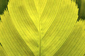 Green leaf texture. — Stock Photo