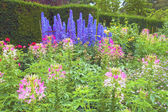 Summer flowers in garden. — Stock Photo