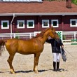 Постер, плакат: Red horse with trainer in a paddock