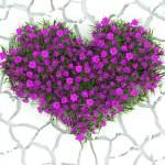 3d flowers heart on white desert background — Stock Photo #39998219