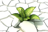 Plant in dried cracked white backgorund — Stock Photo