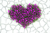 3d flowers heart on white desert background — Stock Photo