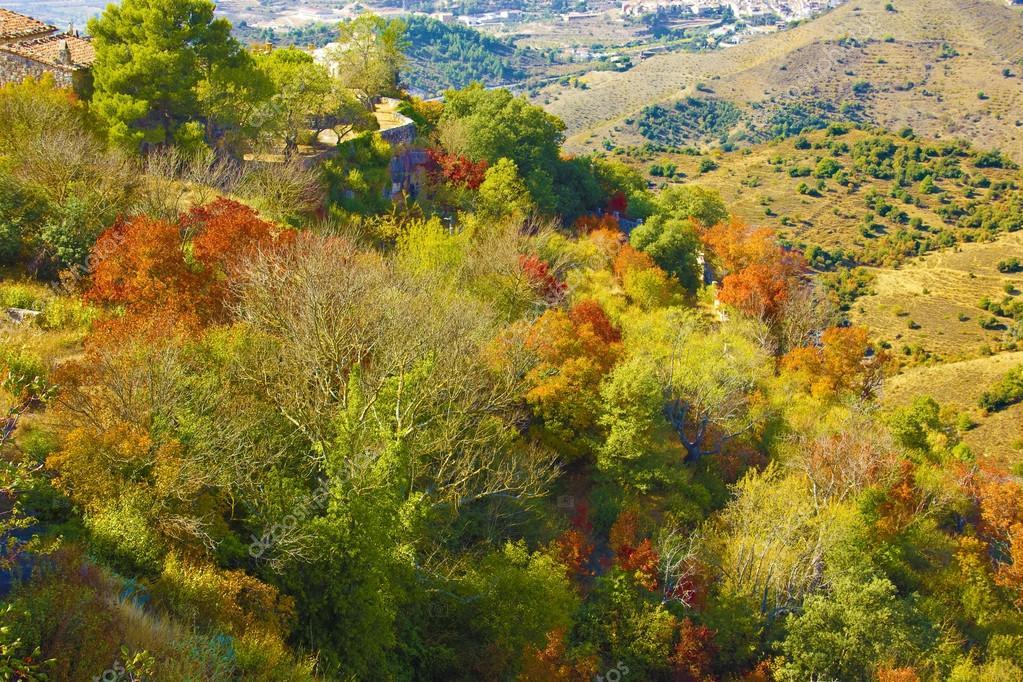 秋天的树木中的颜色.西班牙