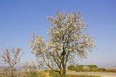 Yeni gelişen ağaç bahar — Stok fotoğraf