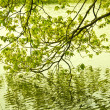 Green colors of spring in the mountain in Spain. A forest reflecting its trees in the water — Stock Photo