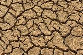 Cracked clay ground — Stock Photo