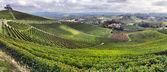 Vineyards in Italy — Stock Photo