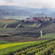Vineyards in Italy, panorama - Stok fotoğraf