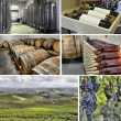 Stock Photo: Set of images of winemaking