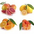 Set of citrus fruits — Stock Photo