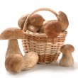 Mushrooms in a basket — Stock Photo #28791139