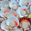 Stock Photo: Scallops in shell