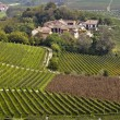 Panorama of vineyards — Stock Photo