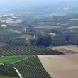 Panorama of autumnal vineyards in Tuscany — Stock Photo