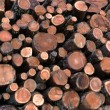 Larch logs at logging — Stock Photo #35908041