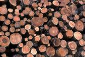 Logs de lariço no log — Fotografia Stock