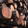 Larch logs at logging — Stock Photo #36283655