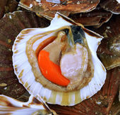 Scallops in the shell — Stock Photo
