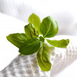 Fresh basil — Stock Photo #36635571