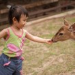 Stock Photo: Asitoddler playing with deer in Bukit Tinggi, Malaysia