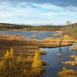 Stock Photo: Small lake on tundra
