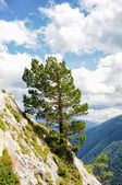 Tree on a mountain slope — Stock Photo