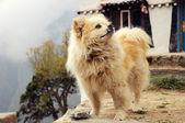 Lindo perro lanudo — Foto de Stock
