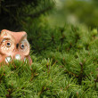 Toy owl in a tree — Stock Photo