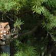 Ceramic owl on the branch of a fir tree — Stock Photo
