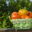 Organic tomatoes  in a basket - Stock Photo