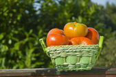 Organic tomatoes in a basket — Stock Photo