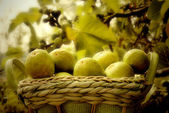Figs basket — Stock Photo