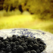 Blackberries on a plate — Stockfoto