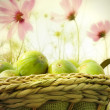 Basket of figs in the garden — Stock Photo