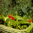 Basket green and red peppers — Stock Photo