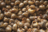 Land snails in sauce, gastronomy — Stock Photo