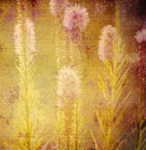 Old background, flowers of the meadow — Foto de Stock