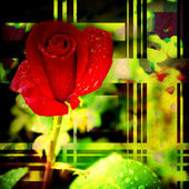 Бутон розы красные карточки — Стоковое фото