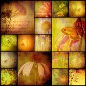 Collage album nature, flowers and butterfly, vintage style — Stock Photo